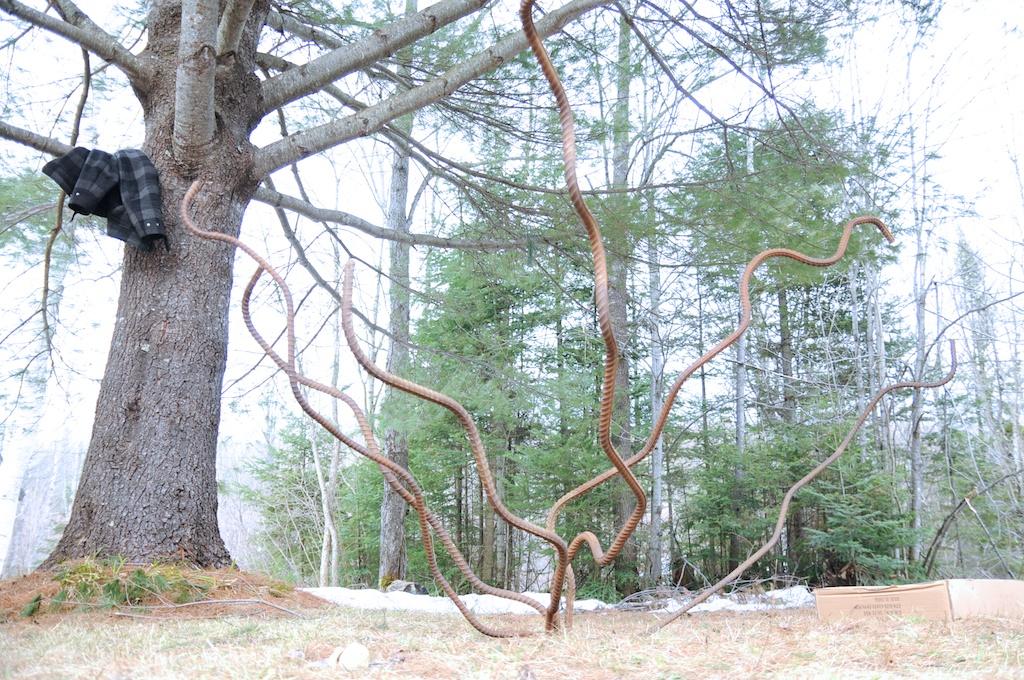 arbre_entre_nous_189